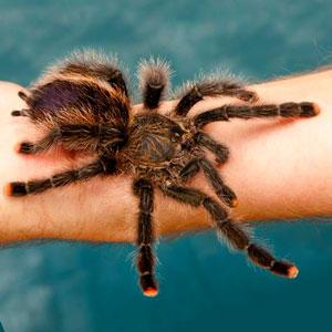 фобия от паяци