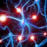 вегетативна нервна система