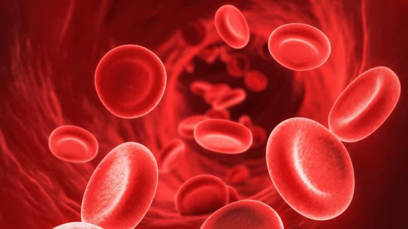 кръвоносни съдове с кръвни клетки